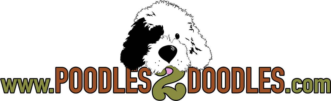 Poodles 2 Doodles, a top breeder of Bernedoodle puppies