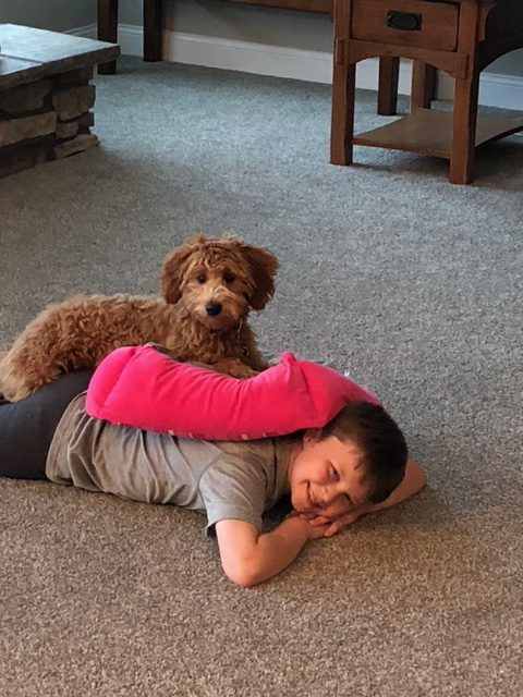 Back naps with one of our Mini Goldendoodles!