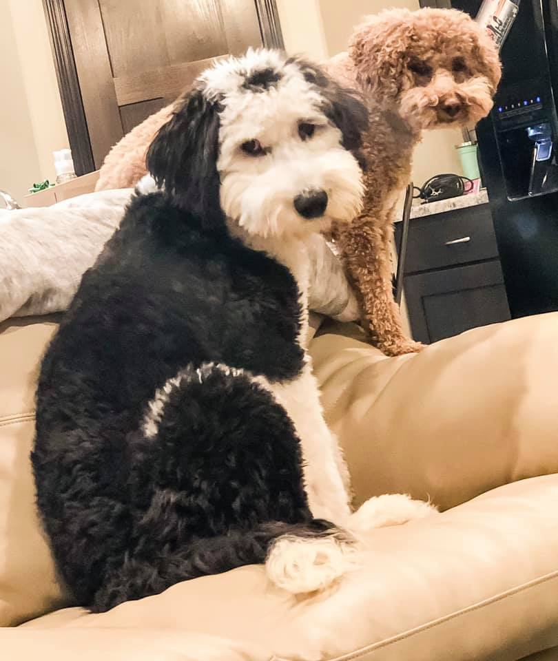 About The Team Behind Our Goldendoodle Puppies | Poodles 2 Doodles