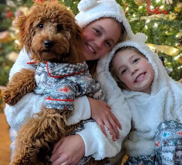 Here is one of our mini f1 Goldendoodle puppies in California cuddling with her sisters during Christmas