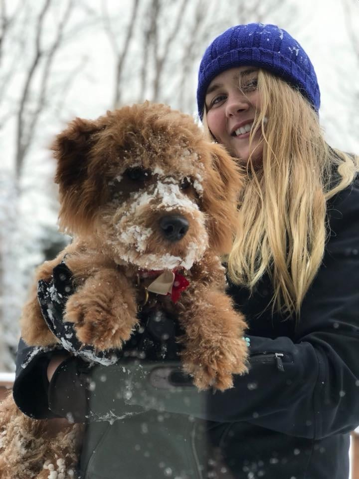 Girl holding snowy mini goldendoodle puppy