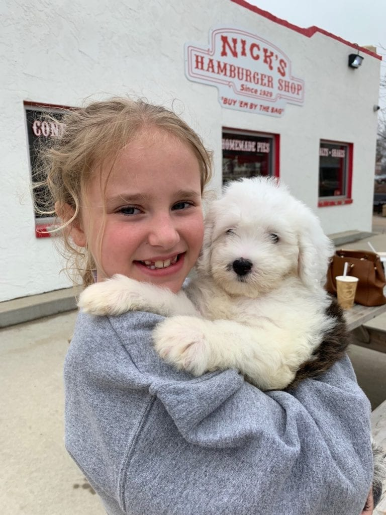 Beautiful Sheepadoodle puppy being held by her human sister