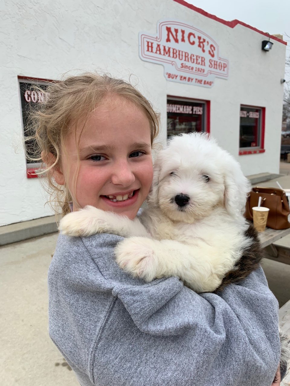 Mini Sheepadoodle Puppies For Sale | Quality Sheepadoodle