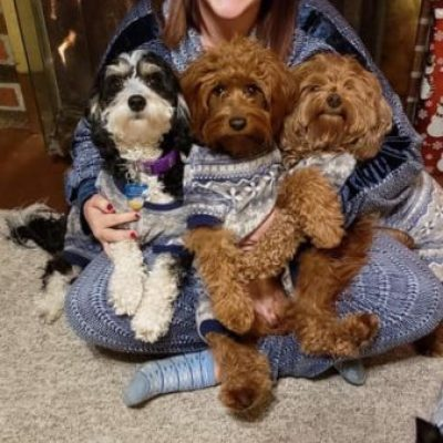 Guardain home with Mini Bernedoodle and Mini Goldendoodle pups