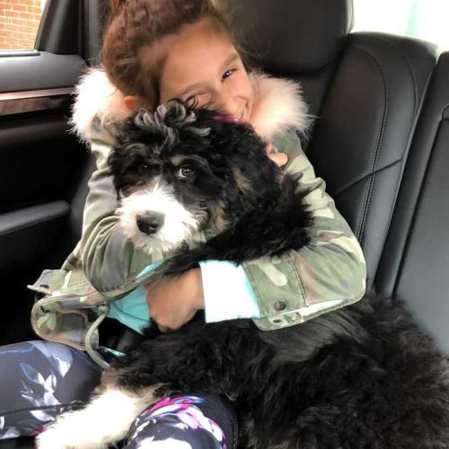 This Bernedoodle puppy is cuddling with his new sister in California!